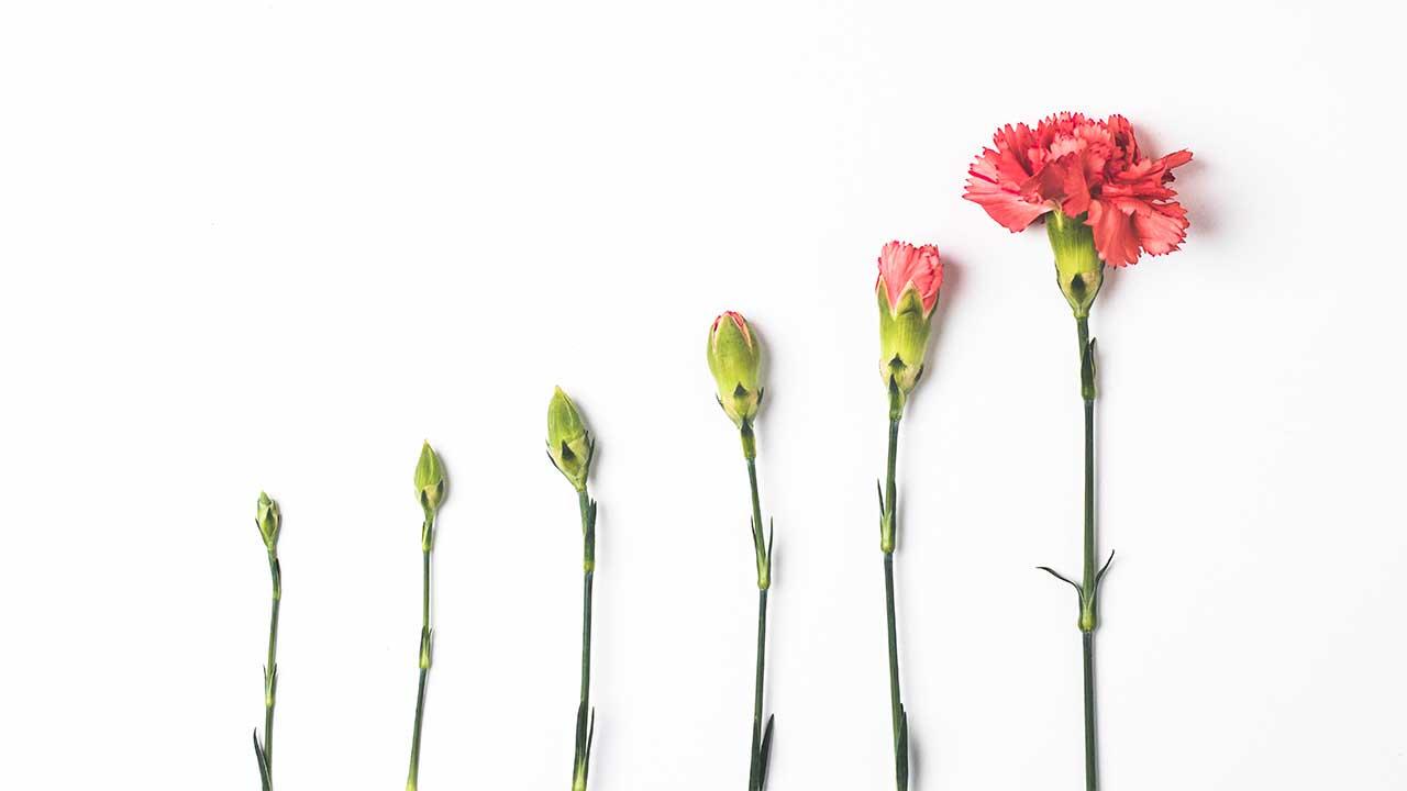sechs verschiedene Wachstumsphasen einer Blume