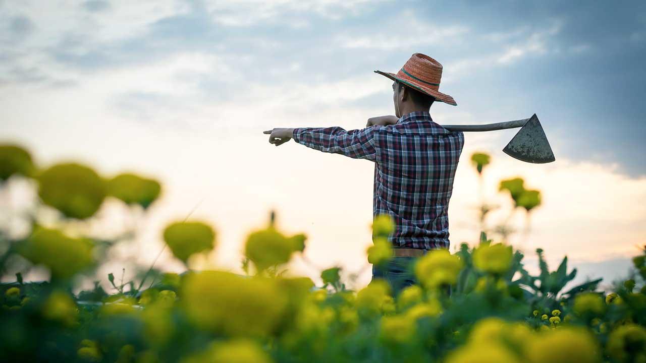 Bauer in einem Feld zeigt vorwärts