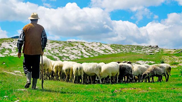 Hirte mit seinen Schafen