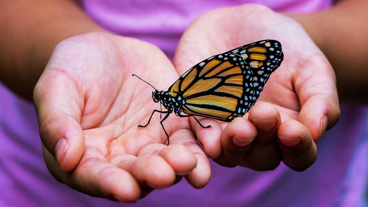 Schmetterling auf einem Händepaar