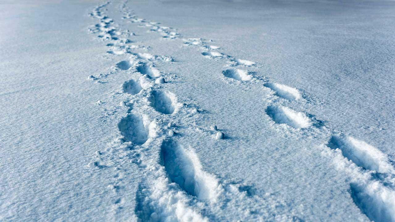 Spuren von zwei Menschen, welche zusammen im Schnee unterwegs sind