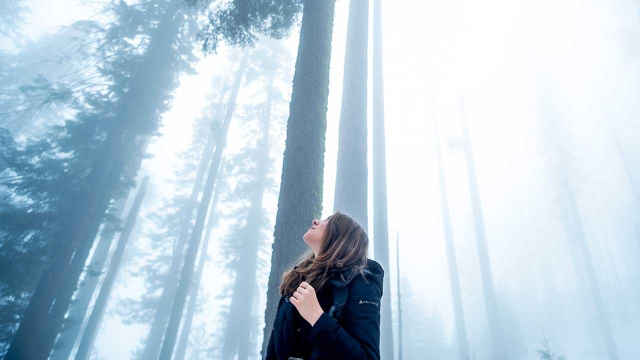 Frau blickt in einem Wald zu Bäumen hoch